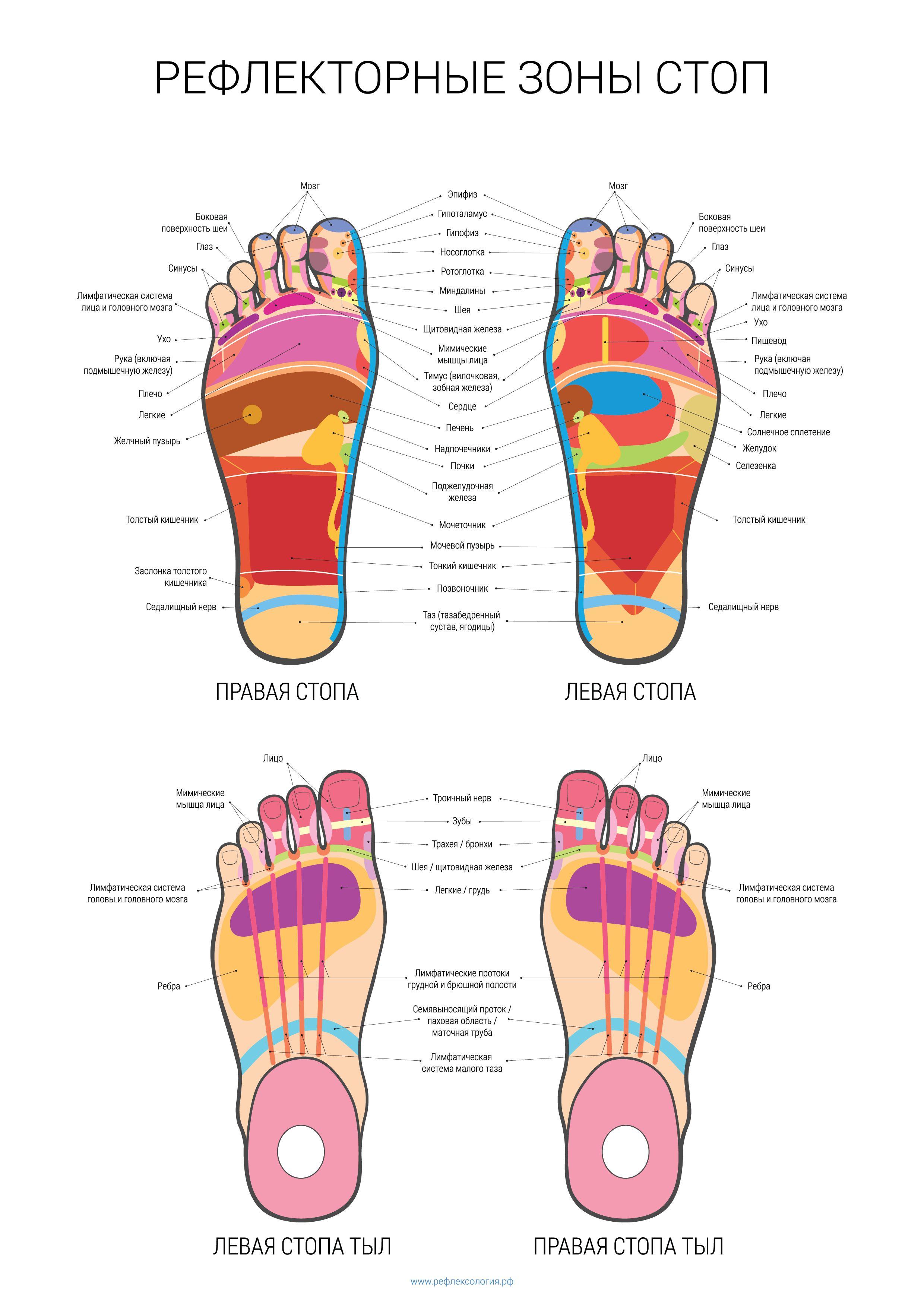 Схема массажа стоп ног фото 434